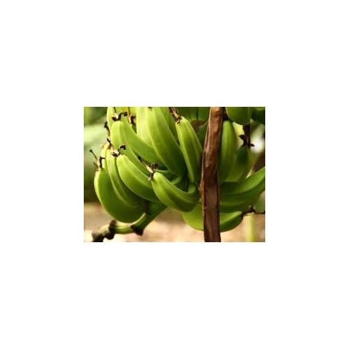 BITOKE OUGANDA