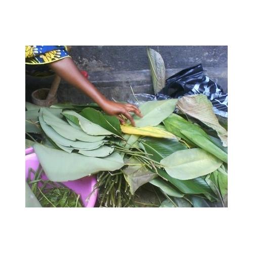 MABOKE CAMEROUN